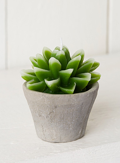 Potted succulent candle