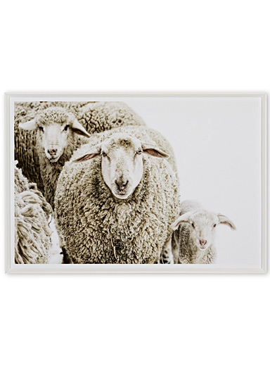 Woolly Stare art print  20.5&quote; x 29.5&quote;
