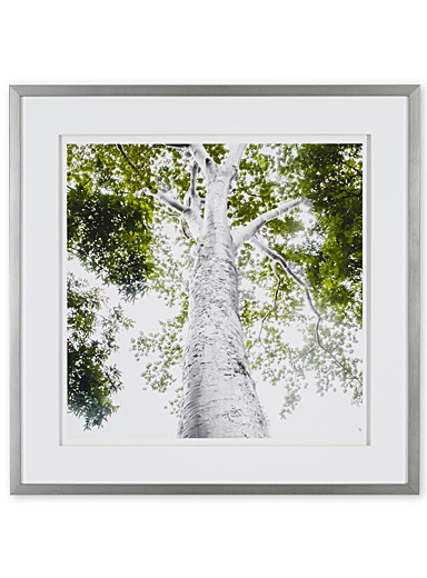 Silver Growth II art print  25.25&quote; x 25.25&quote;