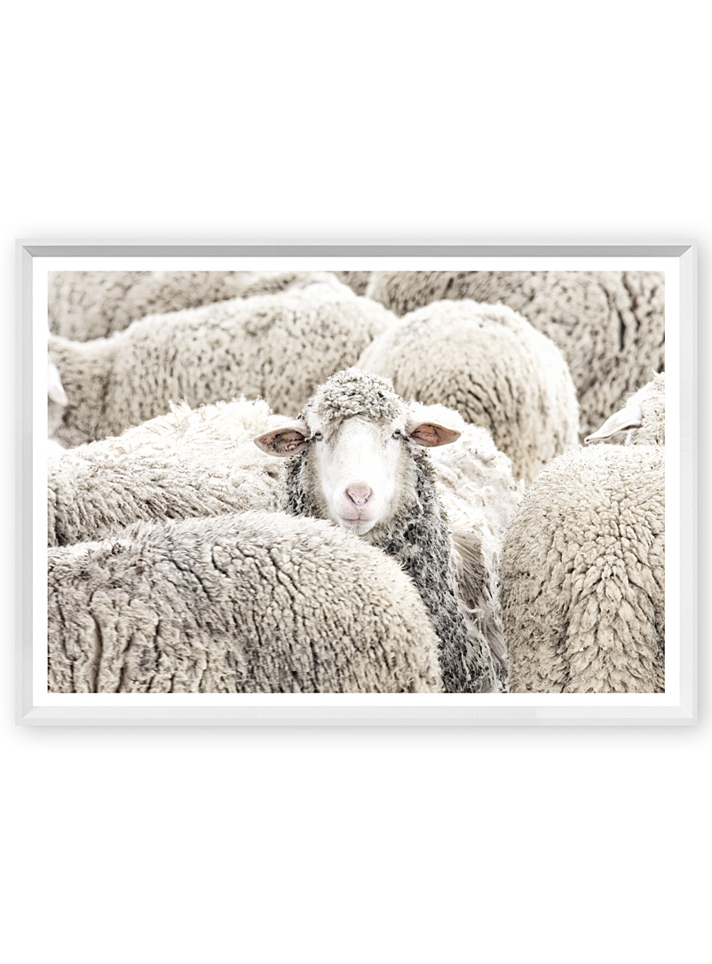 small-woolly-stare-art-print-br-18-x-22