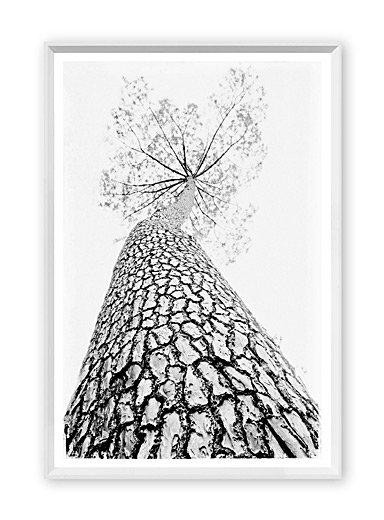 Small majestic tree art print <br>16