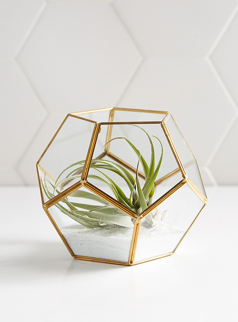 Small geometric terrarium