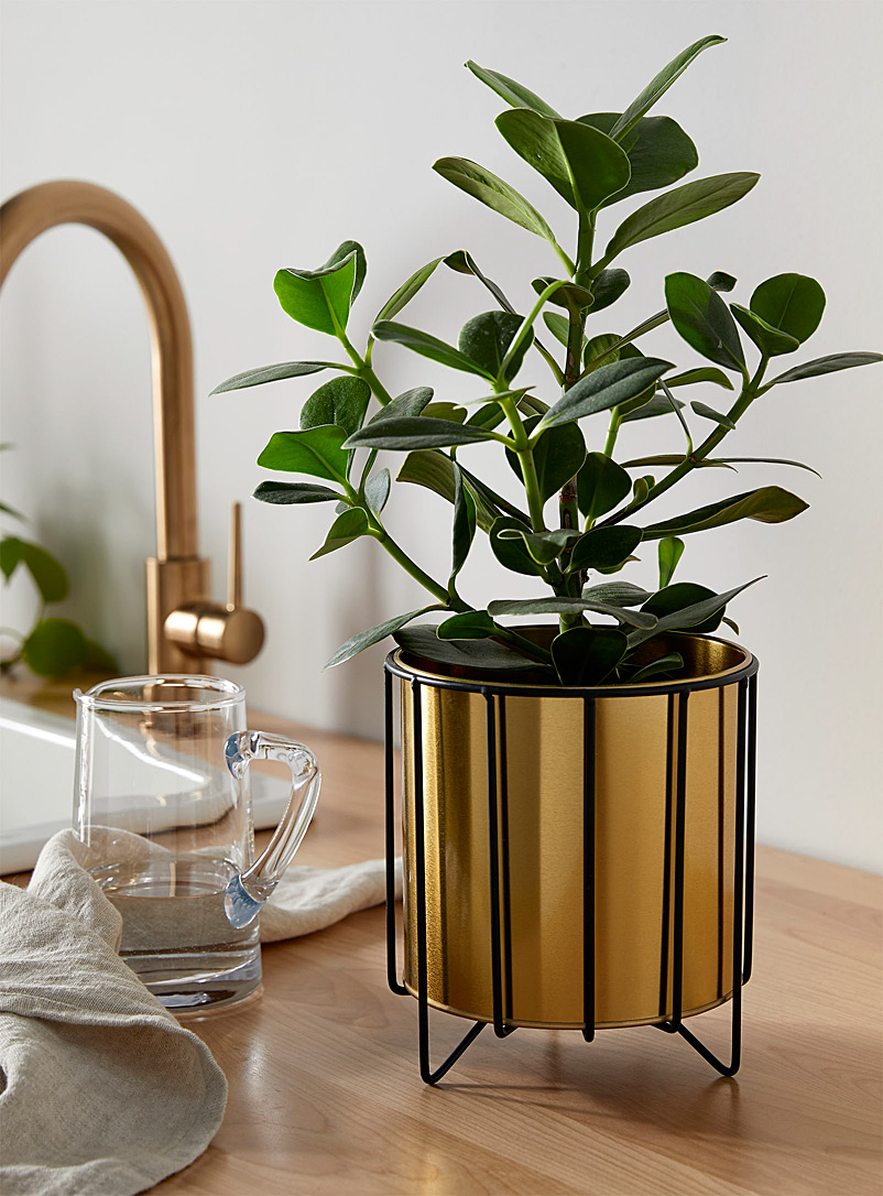 Simons Maison Assorted Gold planter with a matte black holder