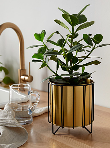 Gold planter with a matte black holder 6.5""