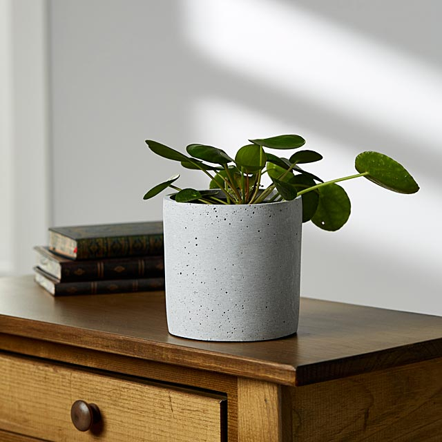 concrete-finish-planter