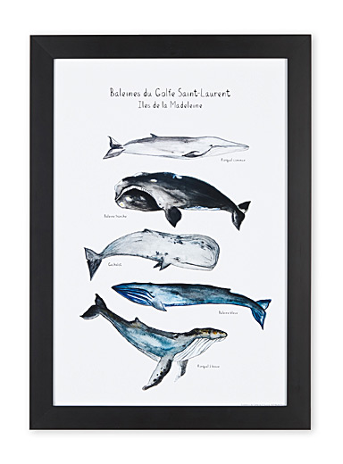 Whale art print  15.25&quote; x 21.25&quote;