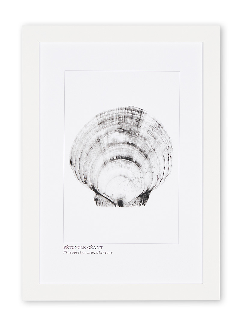 Giant scallop art print - Photography - White