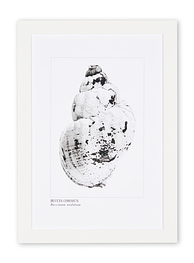 Whelk art print  15.25&quote; x 21.25&quote;
