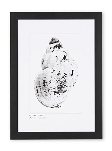 Whelk art print