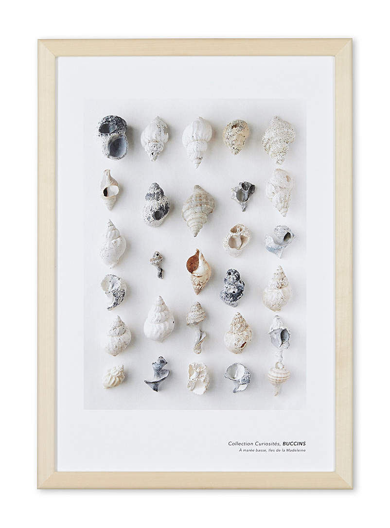 À marée basse Assorted Whelk shell art print