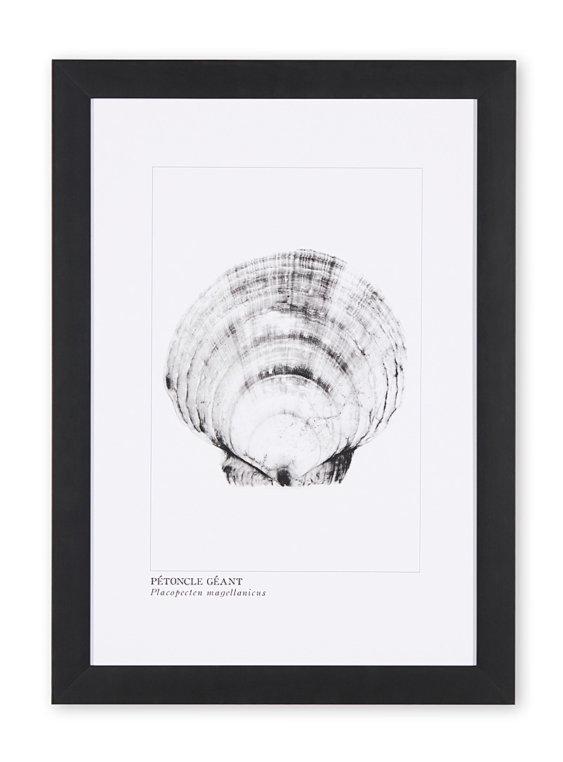 à marée basse Black Giant scallop art print