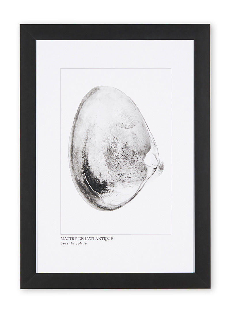 À marée basse Black Atlantic surf clams art print
