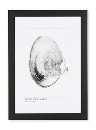 Atlantic surf clams art print