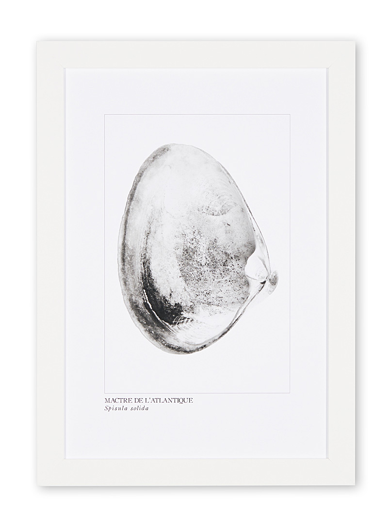À marée basse White Atlantic surf clams art print