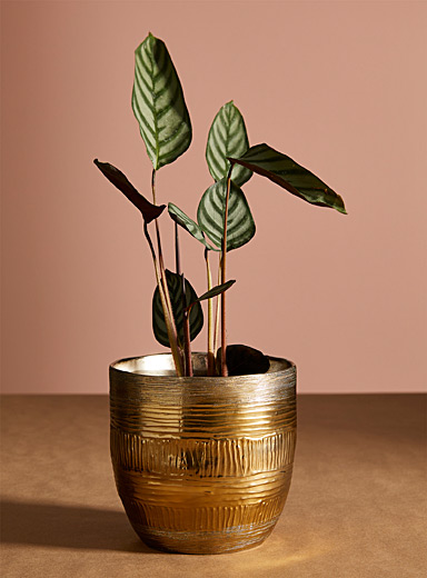 World traditions planter 6.5""