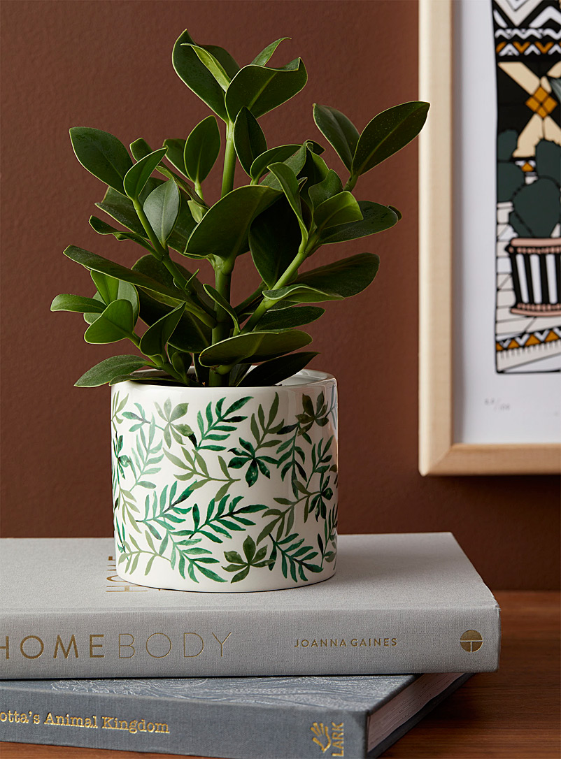 Simons Maison Assorted Exotic foliage planter 4.25 in