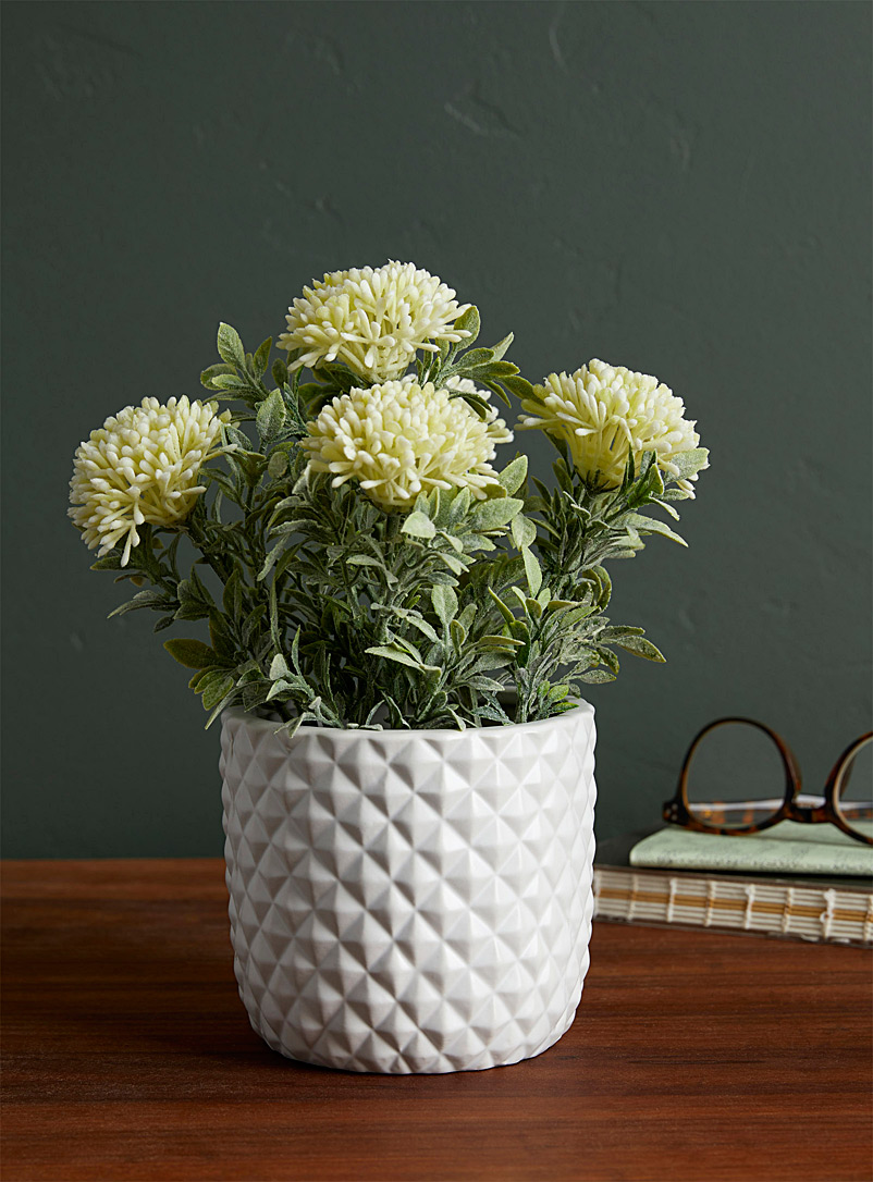 Simons Maison White Chrysanthemum plant in a prismatic pot