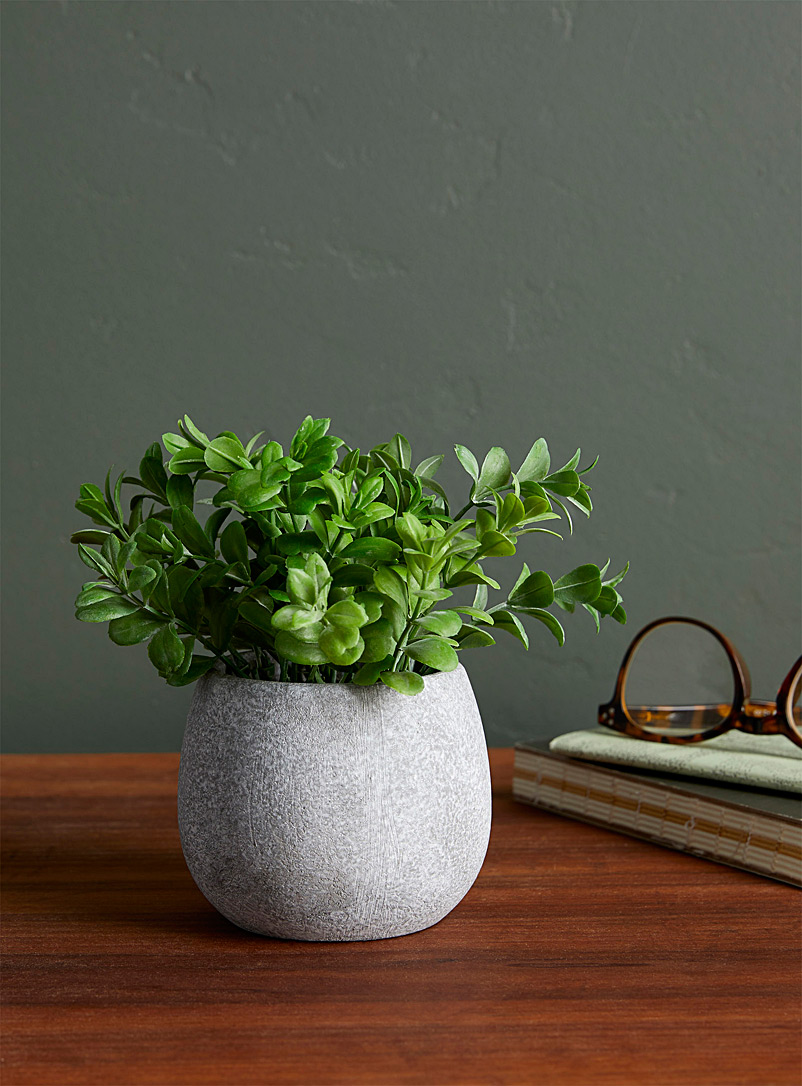 Green plant in a stone pot