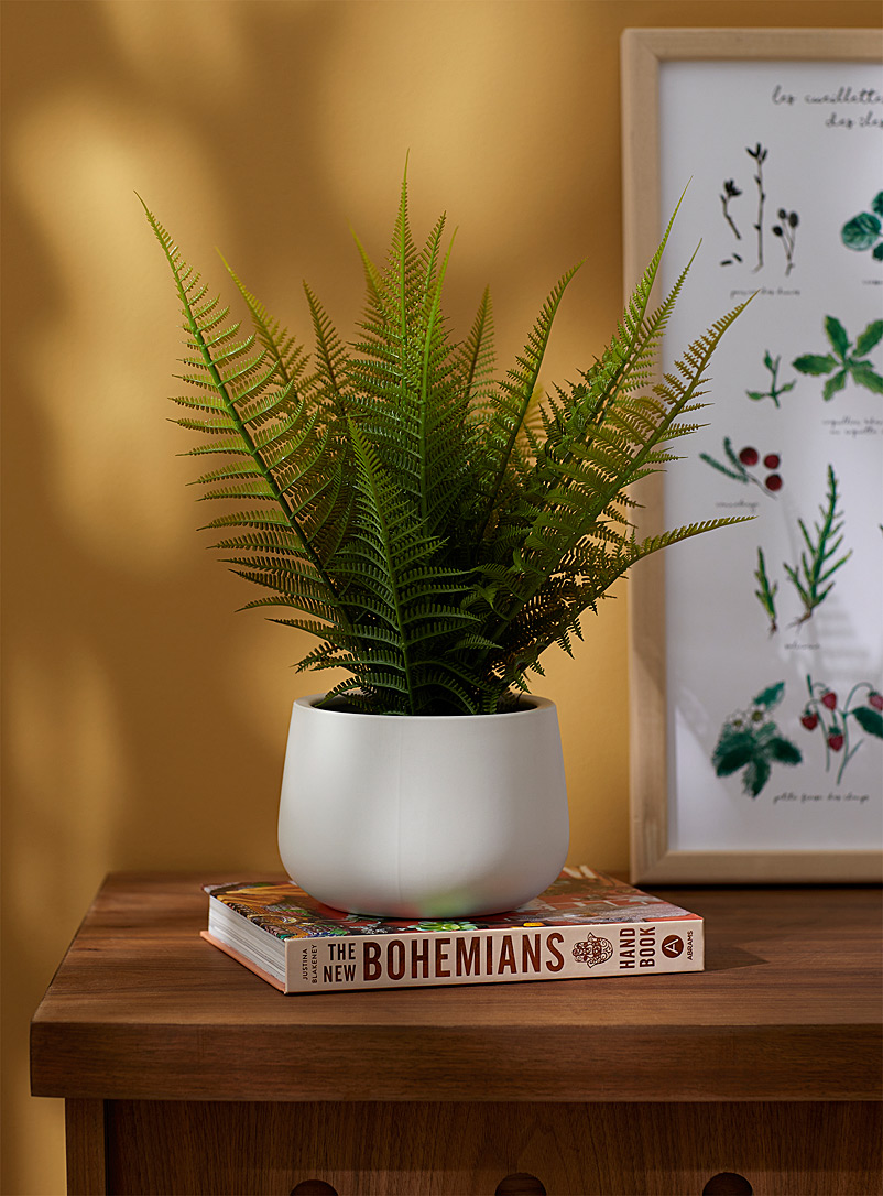 Simons Maison White Fern in a ceramic pot