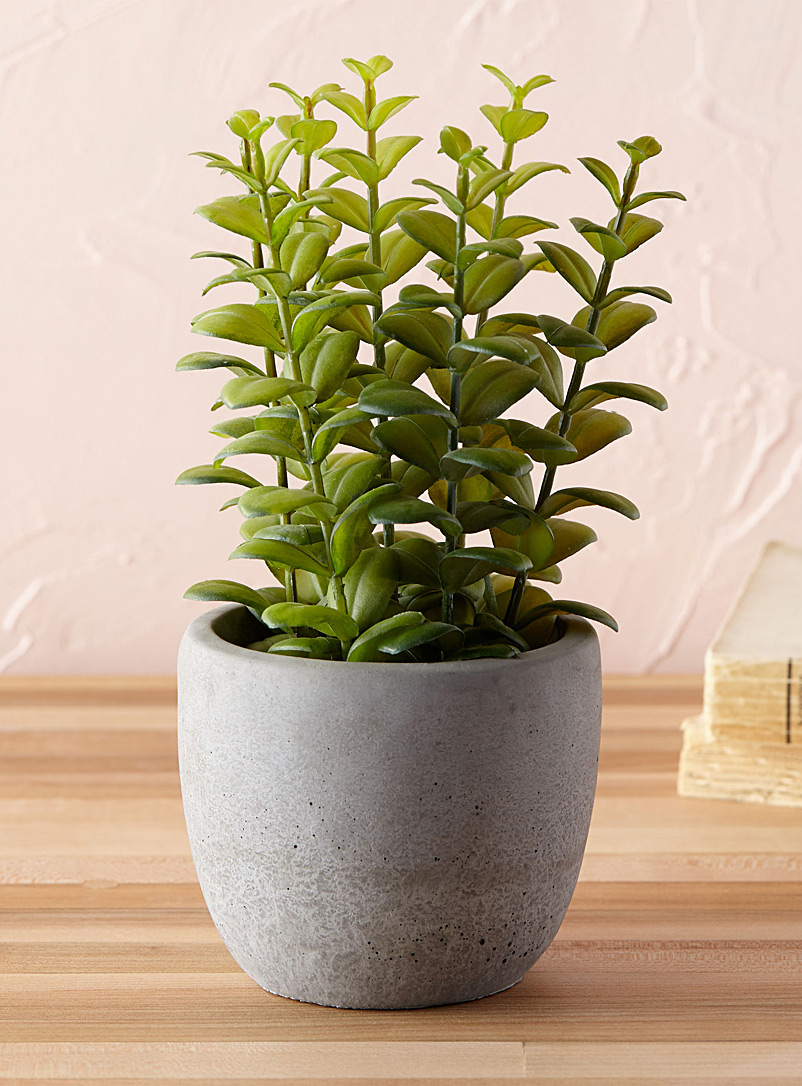 Large green plant in a stone pot