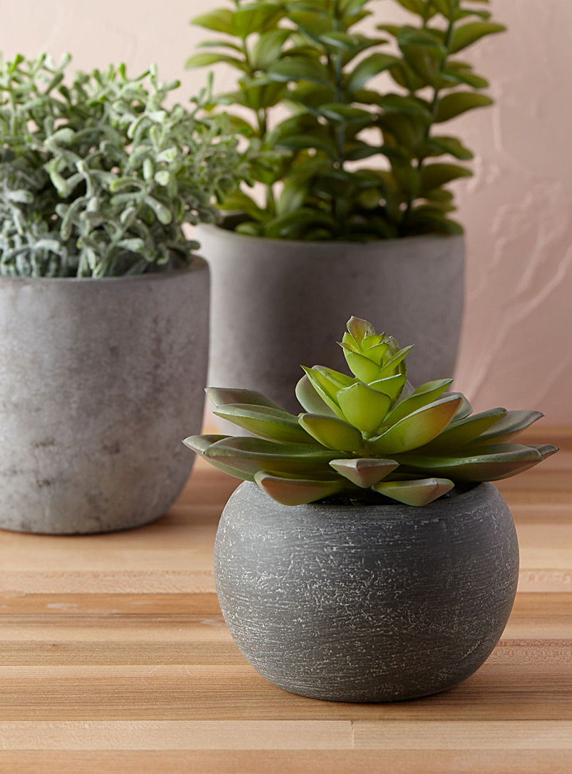 Simons Maison Green Small succulent in a stone pot