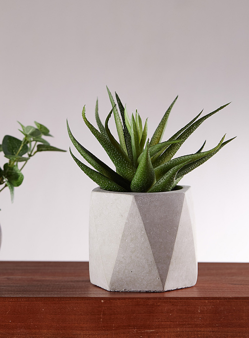 Small succulent in a faceted cement pot - Stylish Objects & Decor Accents - Green