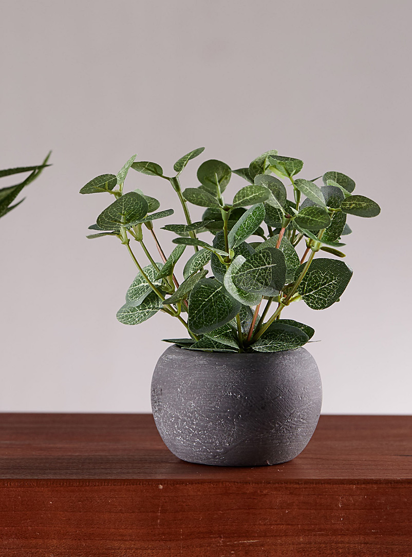 Simons Maison Green Small green plant in a stone pot
