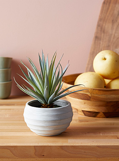 Pineapple plant in textured ceramic pot
