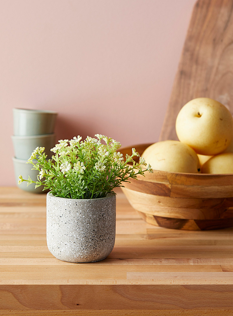 Simons Maison White Yarrow plant in a cement pot