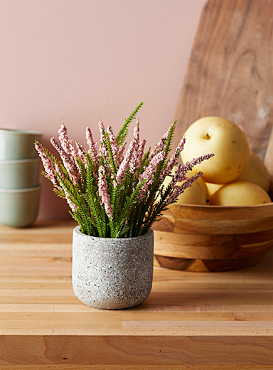 Pink lavender plant in a cement pot