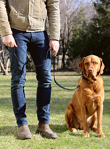 Leather and brass dog leash