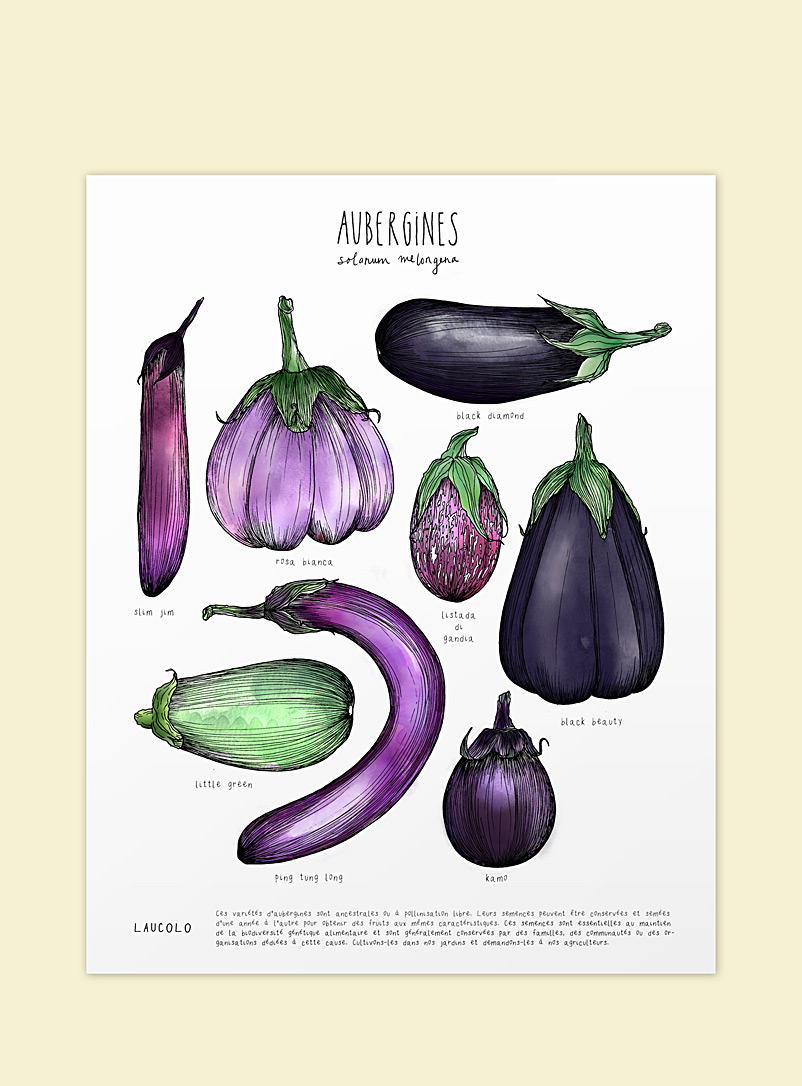 Eggplants poster - Laucolo - White - French