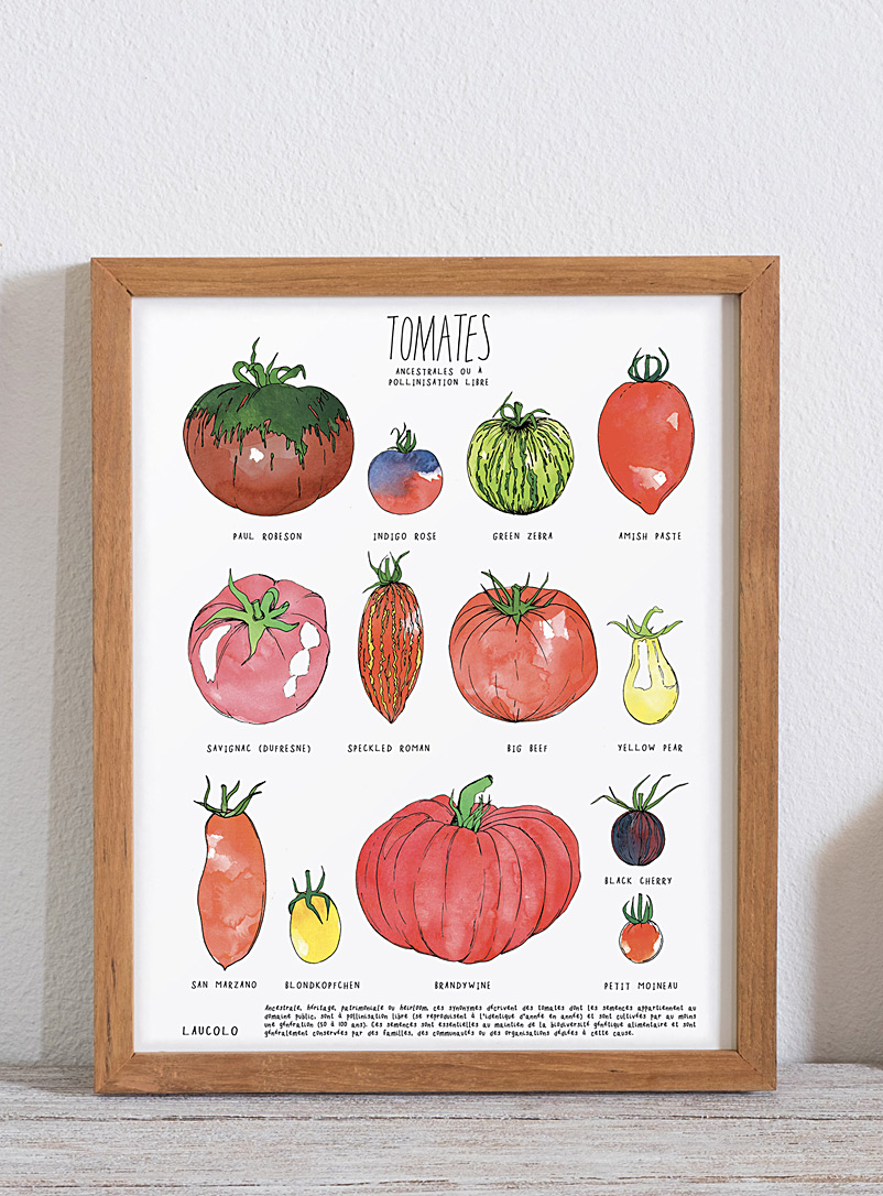 Laucolo White - French Heirloom tomatoes art print 11 x 14 in