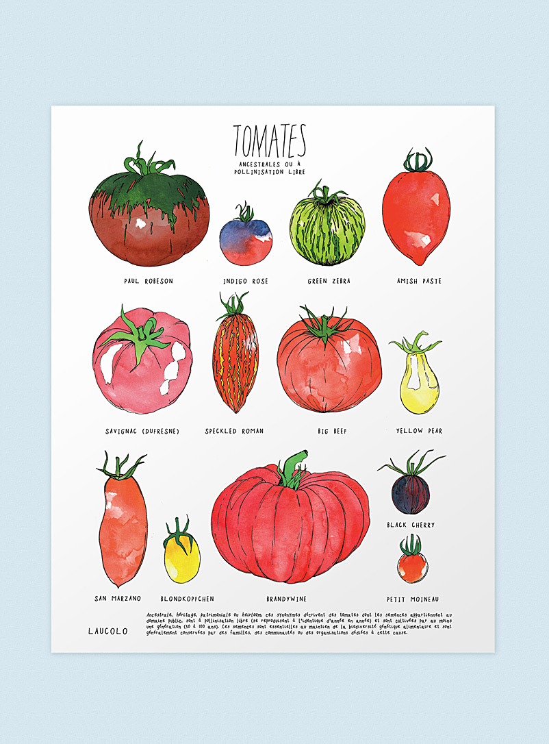Heirloom tomatoes poster - Laucolo - White