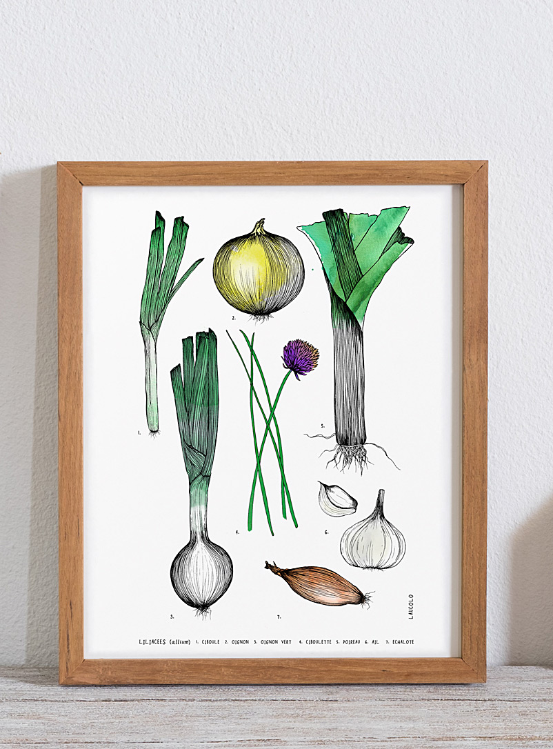 Laucolo White - French Alliaceae family art print 11 x 14 in