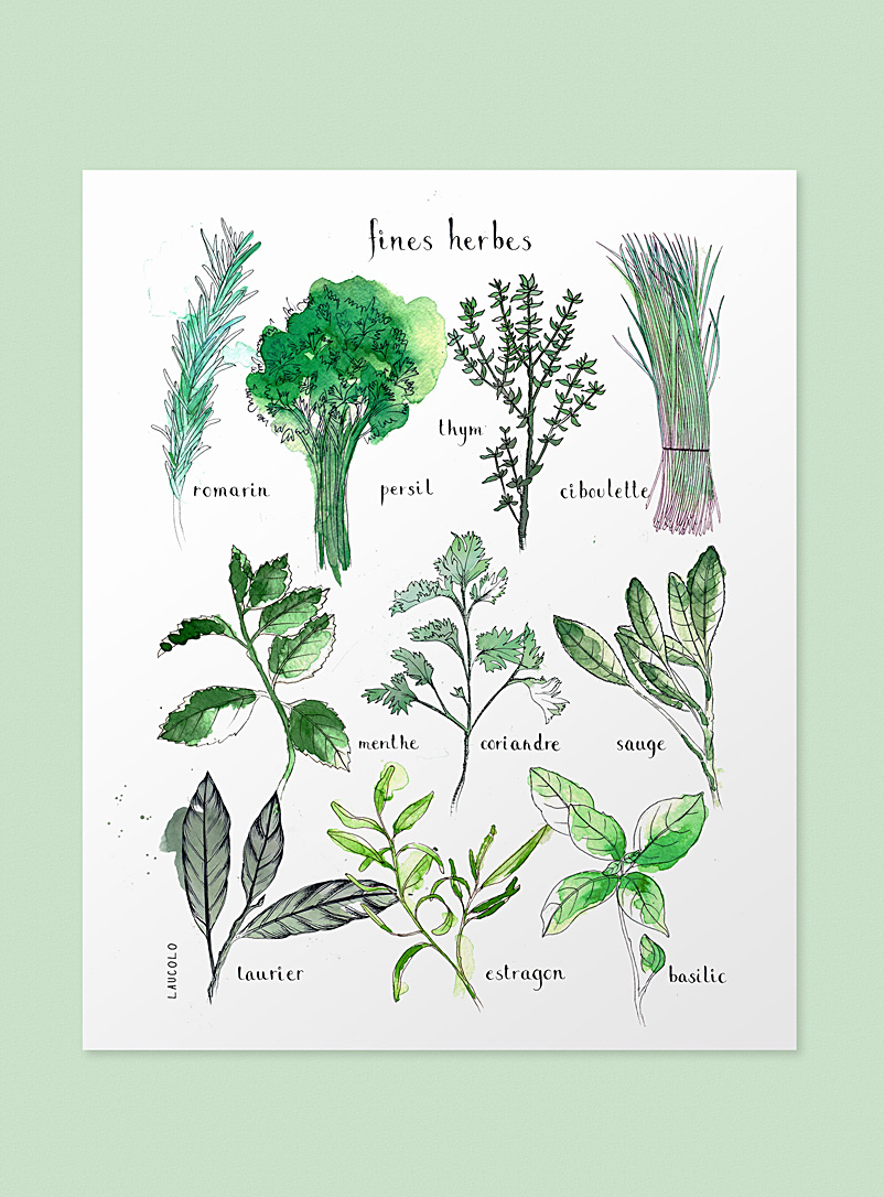 Fresh Herbs poster - Laucolo - White - French