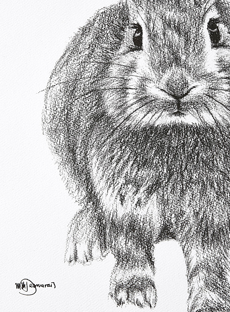 Set of two Adorable Rabbits illustrations  2 sizes available - LE NID Atelier - Black and White