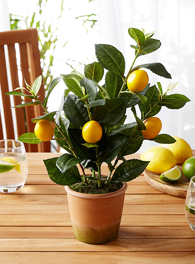 Lemon tree imitation green plant