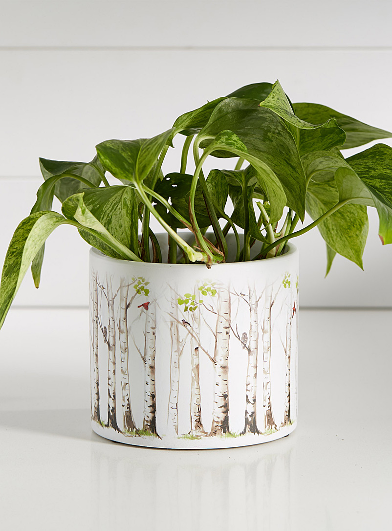 spring-birch-forest-planter