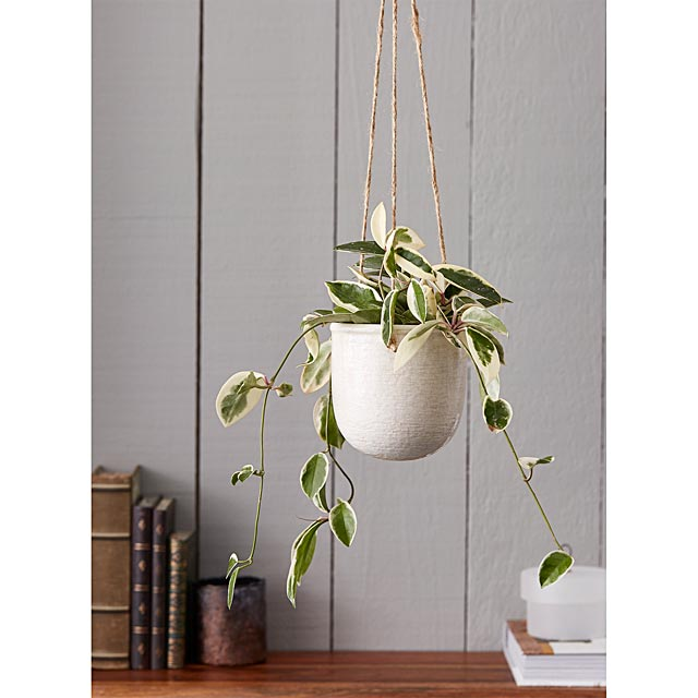 medium-antique-ceramic-hanging-planter